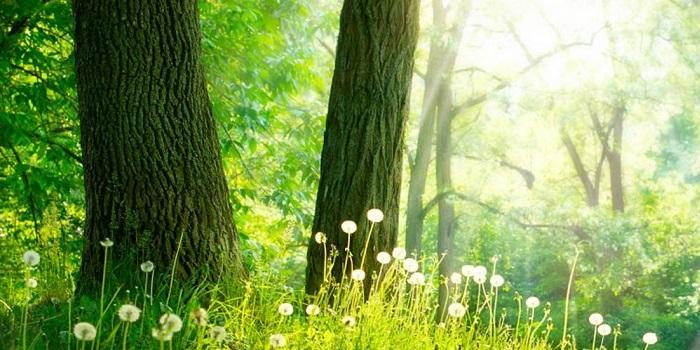 Konica Minolta « Global 100 Most Sustainable Corporations »